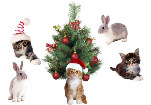 Free Stock Photo of Christmas Pets