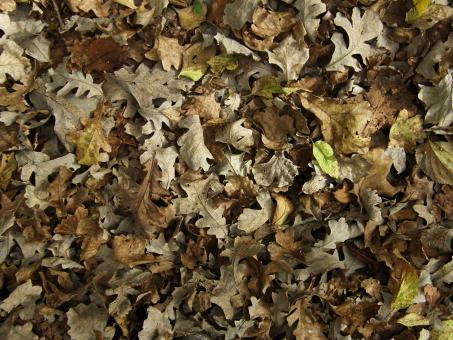 Free Stock Photo of Fallen Leaves Texture