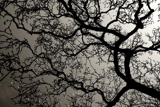 Free Stock Photo of Tree branches with backlight