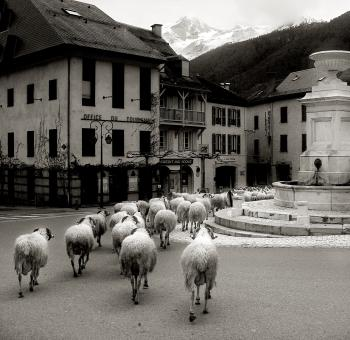 Free Stock Photo of Sheep in old french village
