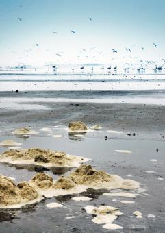 Free Stock Photo of Dirty beach