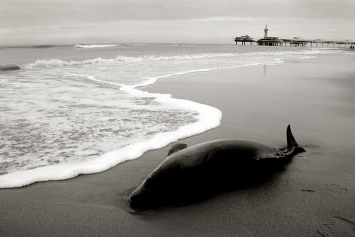 Free Stock Photo of Dolphin washed to shore