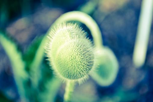Free Stock Photo of Green flower