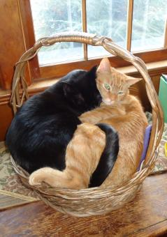 Free Stock Photo of Two Cats in a Basket