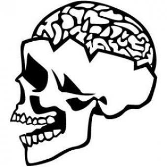 Free Stock Photo of Open Skull And Brain Illustration
