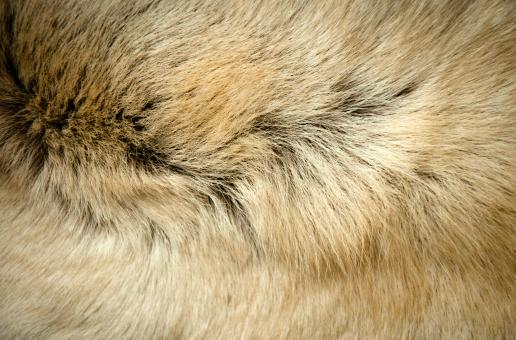 Free Stock Photo of Animal fur texture
