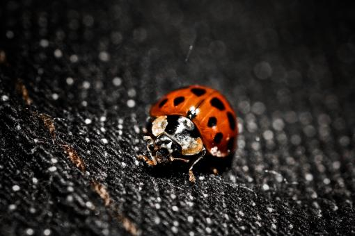 Free Stock Photo of Mistress LadyBug