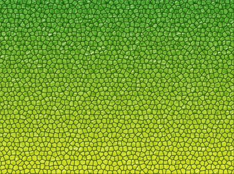Free Stock Photo of Reptile skin texture