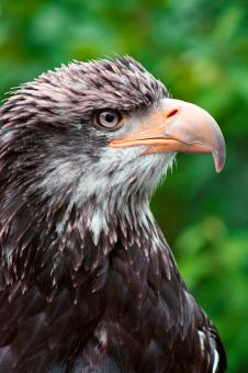 Free Stock Photo of Eagle Profile