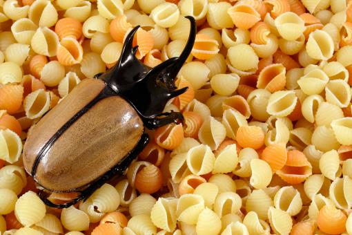 Free Stock Photo of Pasta Beetle