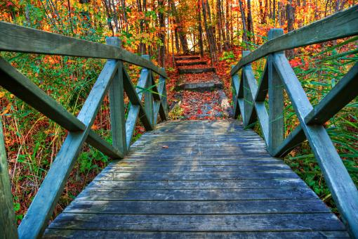 Free Stock Photo of Bridge to Fall - HDR