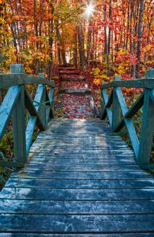 Free Stock Photo of Bridge to Fall