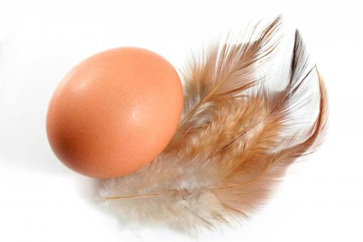 Free Stock Photo of Egg and Feathers