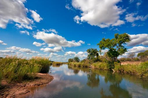 Free Stock Photo of Kruger Park Landscape