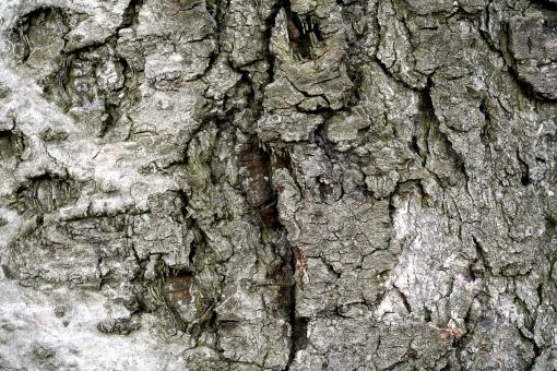 Free Stock Photo of Wood Bark Texture