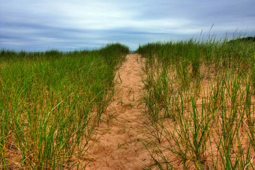 Free Stock Photo of Beach Trail - HDR