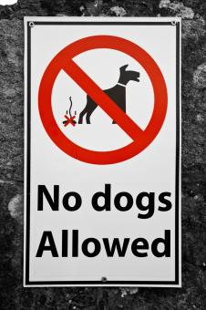 Free Stock Photo of No Dogs Allowed Sign