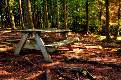 Free Stock Photo of Forest Picnic Table - HDR
