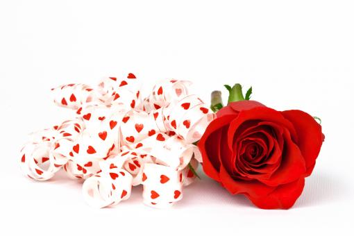 Free Stock Photo of Red Rose and Ribbons