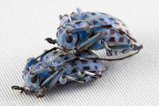 Free Stock Photo of Beetle Love