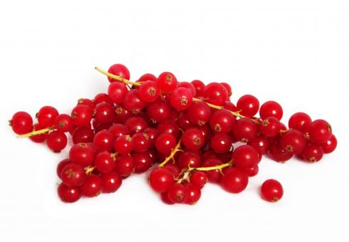 Free Stock Photo of red currant