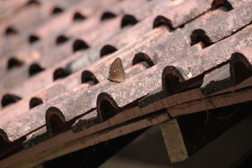 Free Stock Photo of Butterfly on Roof Tiles