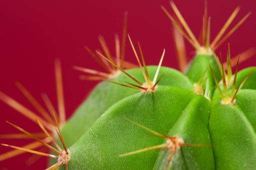 Free Stock Photo of cactus
