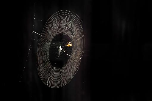 Free Stock Photo of Spiderweb