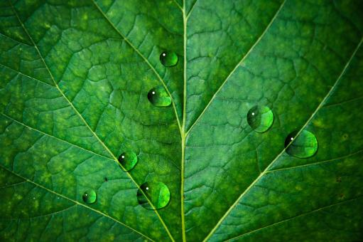 Free Stock Photo of Waterdrops on leaf
