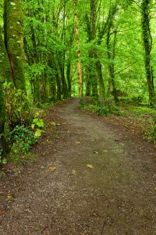 Free Stock Photo of Killarney Park Forest Trail - HDR
