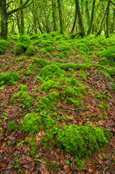 Free Stock Photo of Killarney Forest - HDR