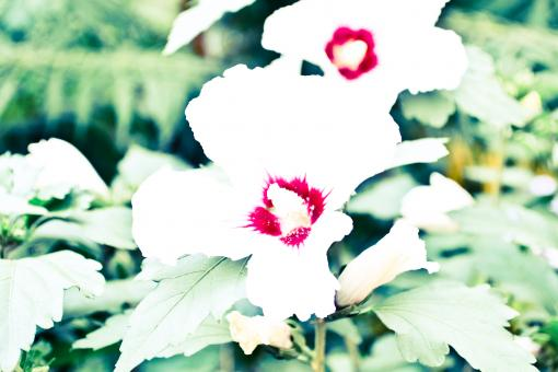 Free Stock Photo of Overexposed White Flowers