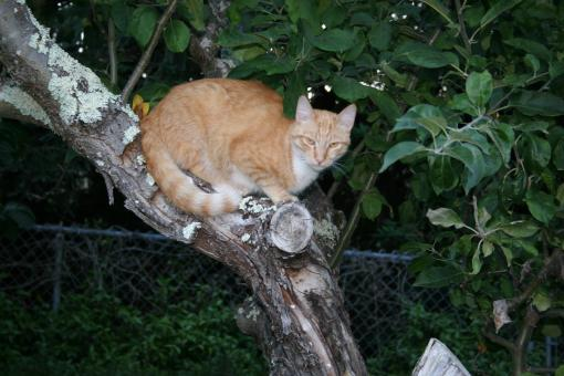 Free Stock Photo of Tabby in Tree