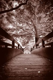 Free Stock Photo of Sepia Bridge