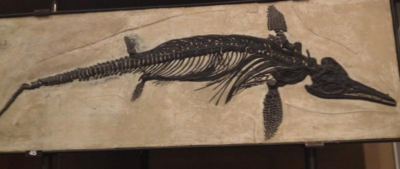 Free Stock Photo of Ichthyosaur Fossil