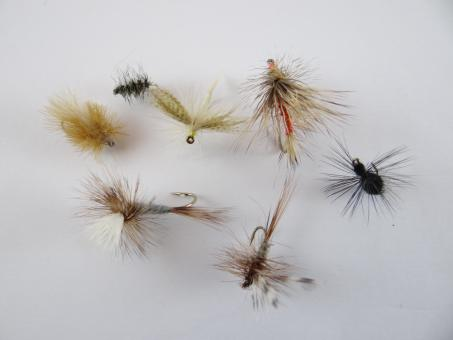 Free Stock Photo of Dry fly