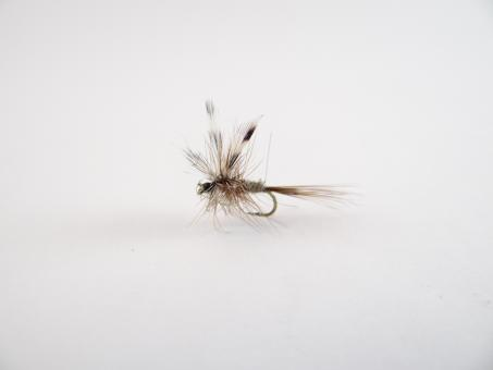 Free Stock Photo of Adams dry fly
