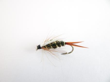 Free Stock Photo of Prince nymph