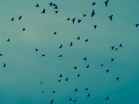 Free Stock Photo of Birds in the sky