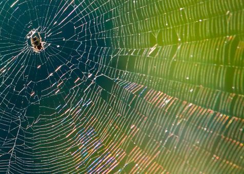 Free Stock Photo of Spider in web