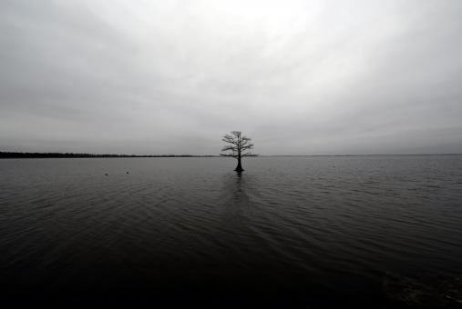 Free Stock Photo of Lonely tree on a lake