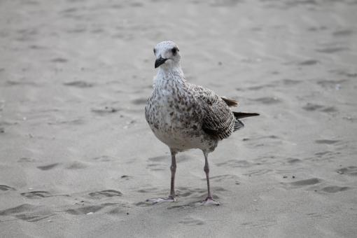 Free Stock Photo of Seagull