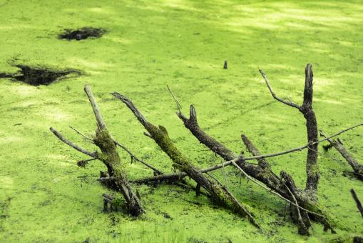 Free Stock Photo of swamp