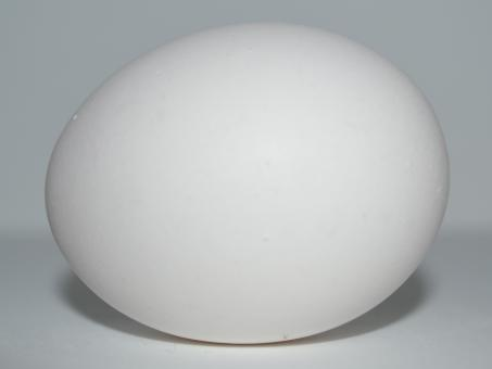 Free Stock Photo of White Egg