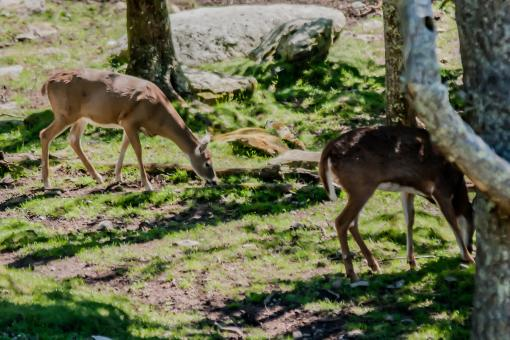 Free Stock Photo of Deer feeding