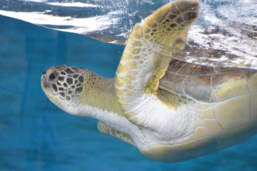 Free Stock Photo of Sea Turtle Aquarium