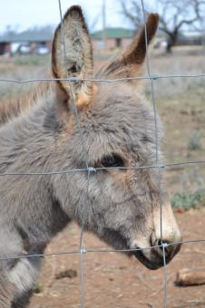 Free Stock Photo of Donkey Portrait