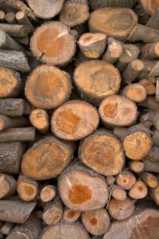 Free Stock Photo of Wood Logs Texture - HDR