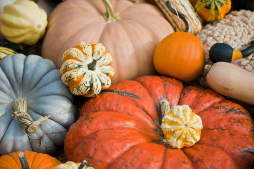 Free Stock Photo of Squash and Pumpkins