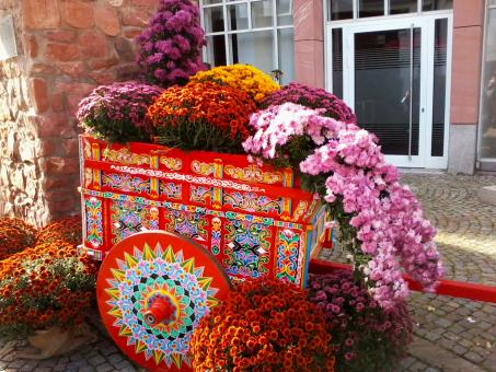 Free Stock Photo of Chrysanthemum cart